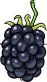 Illustrazione del fumetto della frutta di Blackberry Fotografie Stock
