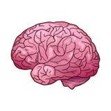 Illustrazione del fumetto di un cervello umano con i punti culminanti e le ombre Vista laterale illustrazione di stock