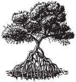 Illustrazione del fumetto di vettore di stile dell'inchiostro dell'albero della mangrovia Immagini Stock