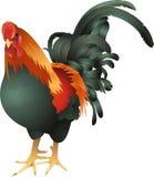 Illustrazione del gallo illustrazione vettoriale