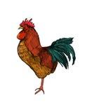 Illustrazione del gallo Immagini Stock Libere da Diritti