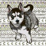 Illustrazione del husky della razza del cane Fotografie Stock Libere da Diritti