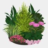 Illustrazione del letto di fiore del giardino Fotografia Stock