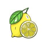 Illustrazione del limone di vettore su fondo bianco Fotografie Stock Libere da Diritti