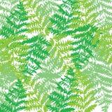 Illustrazione del modello con le foglie verdi della betulla Fotografia Stock