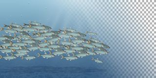 Illustrazione del paesaggio del mare, scuola di vettore del pesce Abbondanza dell'aringa o del merluzzo che si muove nel mare Fum Fotografie Stock Libere da Diritti