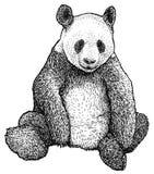 Illustrazione del panda gigante, disegno, incisione, inchiostro, linea arte, vettore illustrazione vettoriale