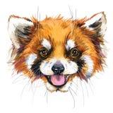 Illustrazione del panda minore dell'acquerello progettazione della maglietta di modo illustrazione di stock