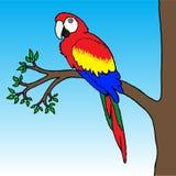 Illustrazione del pappagallo del Macaw Fotografia Stock
