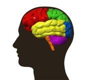 Illustrazione del profilo del maschio e del cervello umano illustrazione di stock