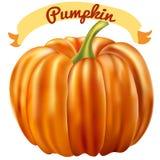 Illustrazione del raccolto di Halloween della zucca su fondo bianco 3D r Fotografie Stock