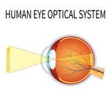 Illustrazione del sistema ottico dell'occhio umano Immagini Stock Libere da Diritti