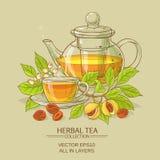 Illustrazione del tè della noce moscata Fotografia Stock Libera da Diritti