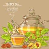 Illustrazione del tè della noce moscata Immagini Stock
