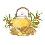 Illustrazione del tè dello zenzero Immagini Stock