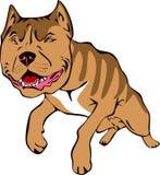 Illustrazione del toro di Pitt illustrazione vettoriale