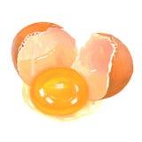 Illustrazione del tuorlo della crepa dell'uovo Fotografia Stock