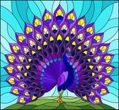 Illustrazione del vetro macchiato con il pavone variopinto su cielo blu, fondo Fotografia Stock Libera da Diritti