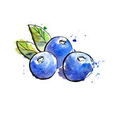 Illustrazione dell'acquerello dei mirtilli Fotografie Stock Libere da Diritti