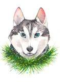 Illustrazione dell'acquerello del cane hysky Fotografia Stock Libera da Diritti