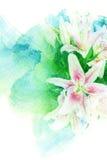 Illustrazione dell'acquerello del fiore Fotografie Stock Libere da Diritti