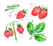 Illustrazione dell'acquerello delle fragole di bosco royalty illustrazione gratis
