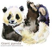 Illustrazione dell'acquerello di tiraggio della mano del panda illustrazione di stock