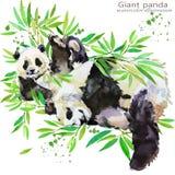 Illustrazione dell'acquerello di tiraggio della mano del panda illustrazione vettoriale