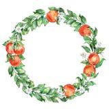 Illustrazione dell'acquerello di una corona dell'agrume con frutta e le foglie arancio Fotografia Stock