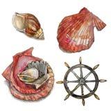 Illustrazione dell'acquerello Elementi nautici Fotografie Stock Libere da Diritti