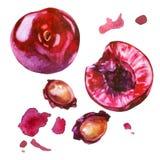 Illustrazione dell'acquerello, insieme Le bacche della ciliegia, le bacche affettate della ciliegia, i pozzi della ciliegia, ross illustrazione di stock