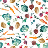 Illustrazione dell'acquerello Prezzemolo, erba, barbabietola, ravanello, cabbag Immagine Stock