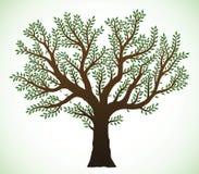 Illustrazione dell'albero Fotografia Stock Libera da Diritti