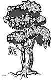 Illustrazione dell'albero Immagine Stock Libera da Diritti