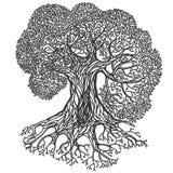 Illustrazione dell'albero Siluetta isolata vettore stilizzato Immagini Stock
