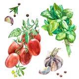 Illustrazione dell'alimento della minestra della zucca torta dell'acquerello isolata su fondo bianco con le verdure pomodoro, cip illustrazione vettoriale