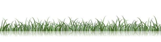Illustrazione dell'erba di vettore Fotografia Stock