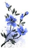 Illustrazione dell'inchiostro e dell'acquerello del ramo con i fiori blu somma Fotografia Stock