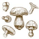 Illustrazione dell'incisione dei funghi Fotografia Stock