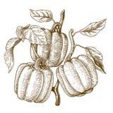 Illustrazione dell'incisione dei peperoni dolci dell'albero Immagini Stock