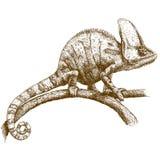 Illustrazione dell'incisione del camaleonte Fotografie Stock