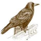 Illustrazione dell'incisione del corvo Fotografia Stock