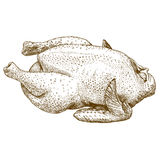 Illustrazione dell'incisione del pollo crudo Immagine Stock Libera da Diritti