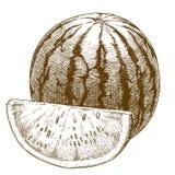 Illustrazione dell'incisione dell'anguria Immagini Stock Libere da Diritti