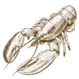 Illustrazione dell'incisione dell'aragosta Fotografia Stock