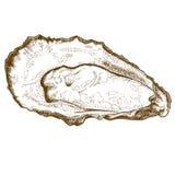Illustrazione dell'incisione dell'ostrica Immagine Stock