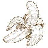 Illustrazione dell'incisione della banana Immagini Stock Libere da Diritti