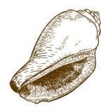 Illustrazione dell'incisione della conchiglia del cono Immagini Stock