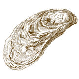 Illustrazione dell'incisione della conchiglia di ostrica Immagine Stock Libera da Diritti