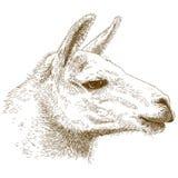 Illustrazione dell'incisione della lama Fotografia Stock Libera da Diritti